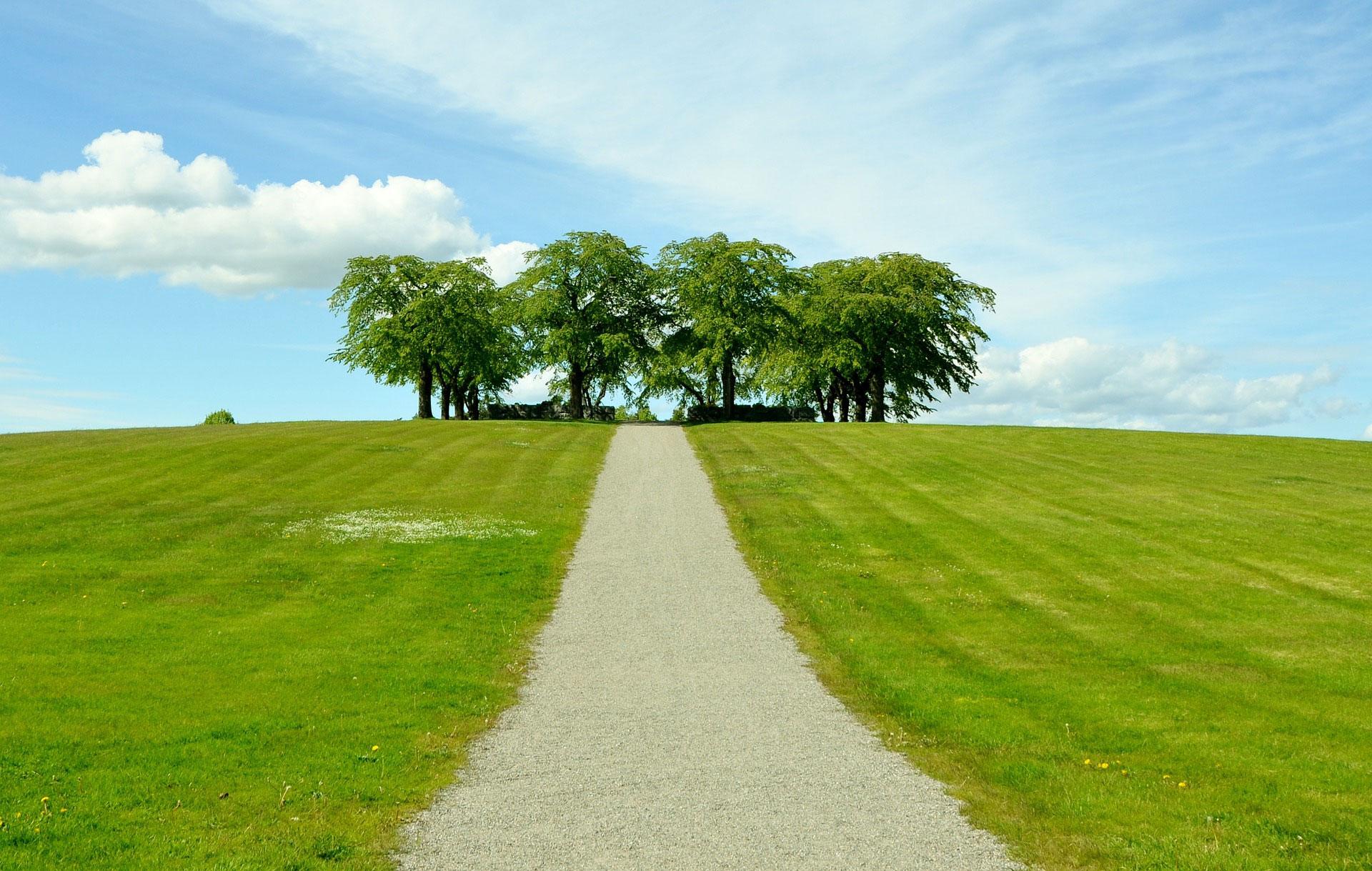Wiese-Baum